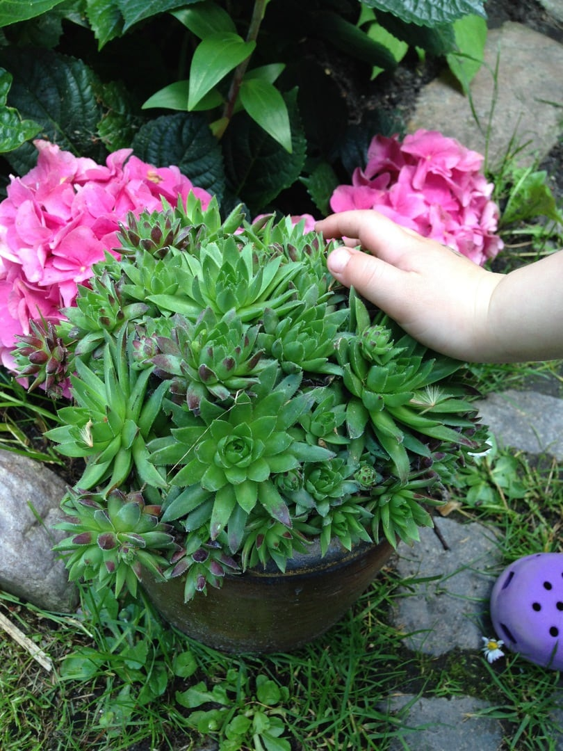 Garten Frau Mutter Blog 2