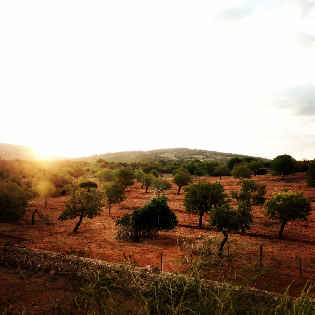 7 Familienurlaub Mallorca frau mutter blog