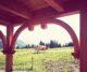Urlaub am Bauernhof in der Steiermark: Unser Geheimtipp für Familien